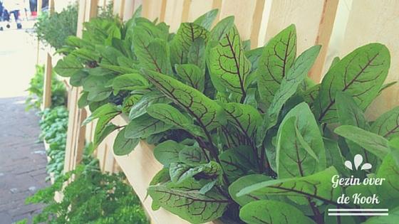 Leeuwarden Culinair basilicum